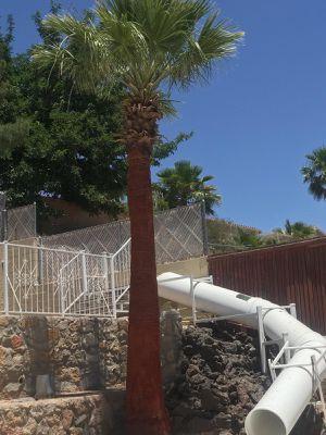 Palamas y cemento for Sale in El Paso, TX