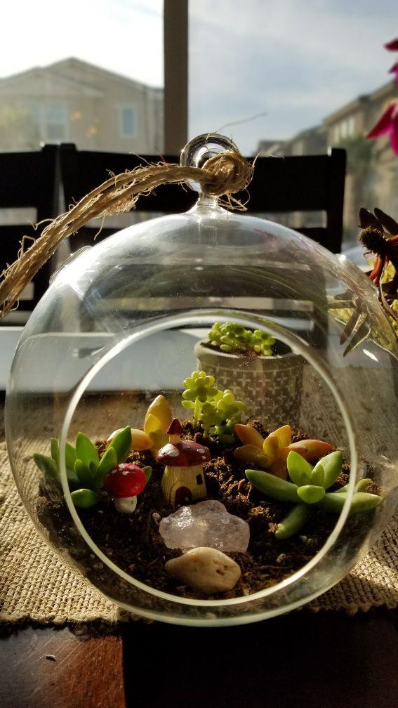 Terrarium succulent arrangement