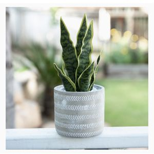 Flora Bunda Faux Snake Plant With Grey Pot for Sale in Baltimore, MD