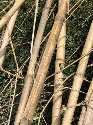 Free Seasoned Bamboo for Sale in Doylestown, PA