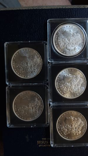 NICEST MORGANS YOU'LL FIND for Sale in Portland, OR