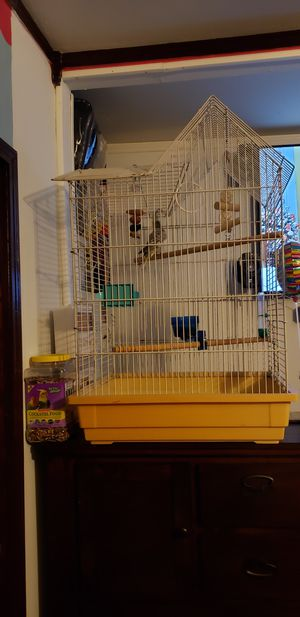 Cockatiel bird with cage. for Sale in Irving, TX