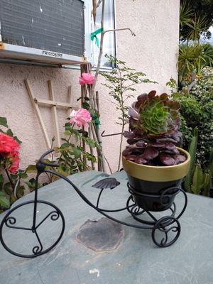 BIKE POT & PLANT for Sale in South Gate, CA