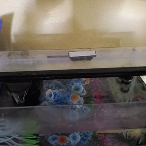 Fish With 5.5 Gallon Fish Tank for Sale in Oceanside, CA