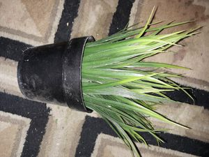 IKEA pp-h fake plant for Sale in Rapid City, SD