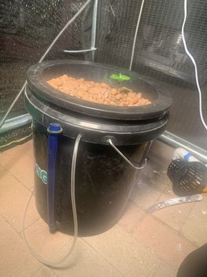 Hydroponic Bucket with drain and water level whose for Sale in Perris, CA