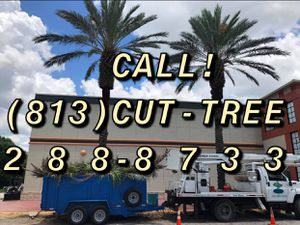 Call 813-cut-tree for Sale in St. Petersburg, FL