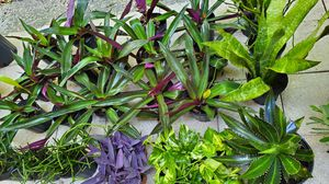 Colorful plants. Perfect LANDSCAPING PLANTS. just $3 each for Sale in Deerfield Beach, FL