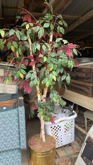 Plant for Sale in Dalton, GA