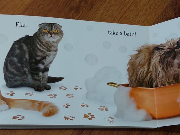 Children's board book - CAT