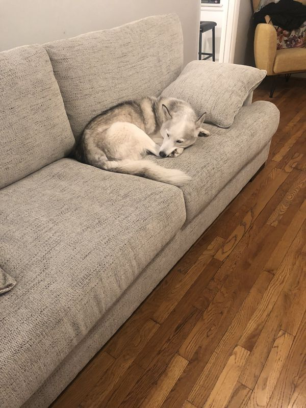 Newly Used Couch