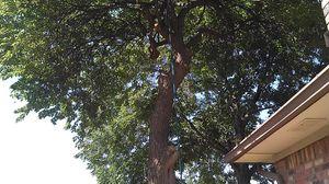 tree service for Sale in Dallas, TX