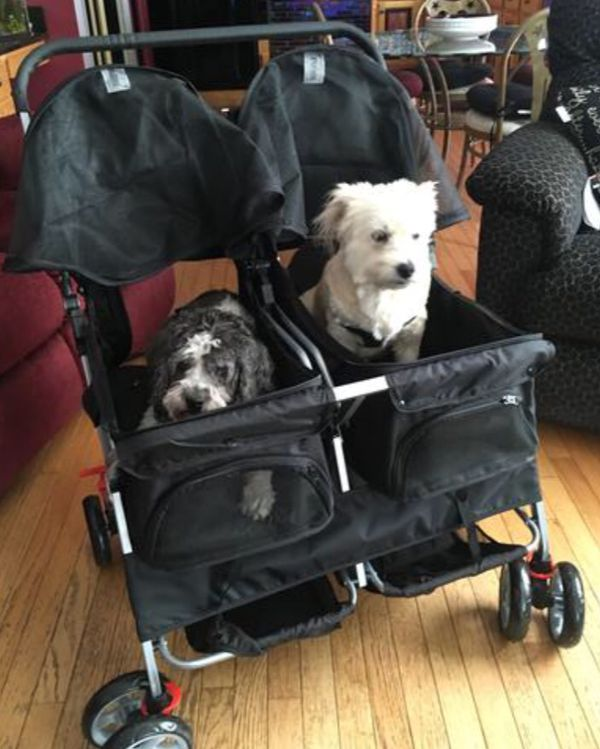 Double dog stroller new in box fully separated