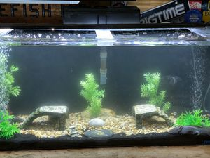 Fish Tanks for Sale in Antioch, CA
