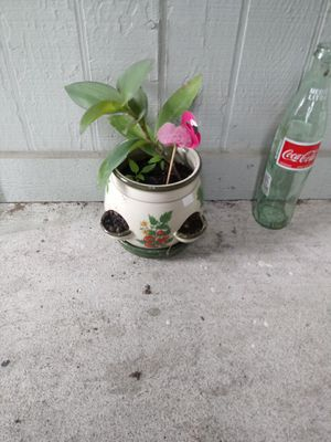 Potted plant for Sale in Houston, TX