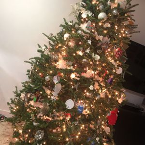 Real Tree For Sale 7/8 Ft Too Big For My Space for Sale in Miami, FL