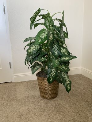 Plant for Sale in Gulfport, FL