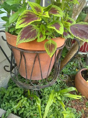 Plants,pots and plant stands for Sale in Houston, TX