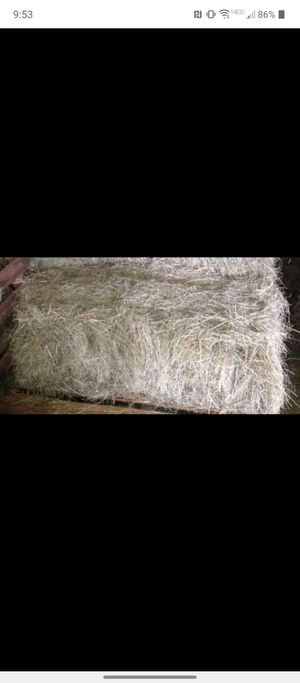 Hay for Sale in Mulberry, FL