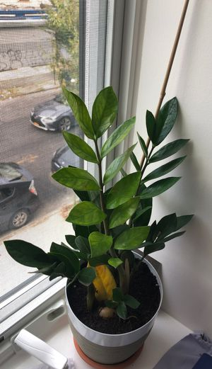 Healthy Green Indoor Plant for Sale in Brooklyn, NY
