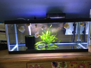 20 Gallons long, glass top cover, heater, filter and hoodlight for Sale in Chelsea, MA