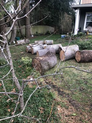 """Free firewood. """"Fir"""" for Sale in Kenmore, WA"""