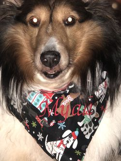 Reversible Dog Bandanas (with Optional Machine Embroidery For Additional Cost). for Sale in Charlotte,  NC