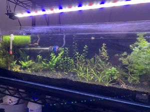 12 Gallon Long Bookshelf Aquarium Complete Set Up for Sale in Seattle, WA