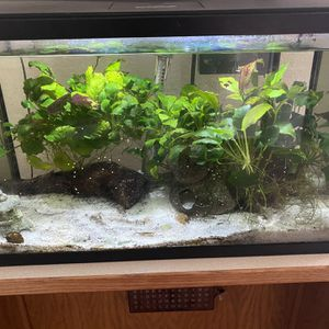 Fish Tank for Sale in Atherton, CA