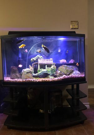 Aquarium 55 gallons and stand and 8 chiclids African for Sale in Orange, TX