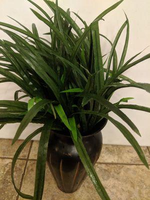 Fake plants for Sale in San Tan Valley, AZ