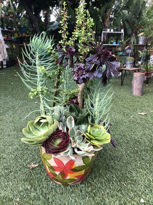 Very gorgeous , nicely arranged mix of beautiful succulent plants in a beautiful ceramic pot for Sale in Los Angeles, CA