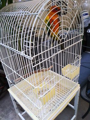 Cage and bird for sale for Sale in Miami, FL