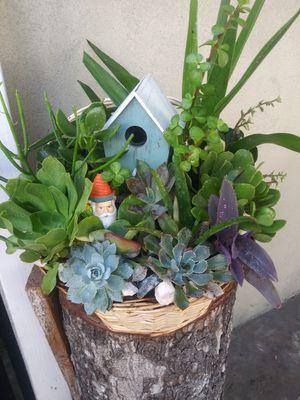 Succulents en bella canasta grande for Sale in South Gate, CA