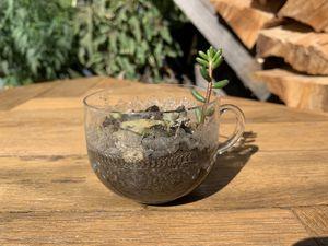 Plants 🌱 In Tiny Cups | Plantas 🌱 En Tacitas for Sale in Montclair, CA
