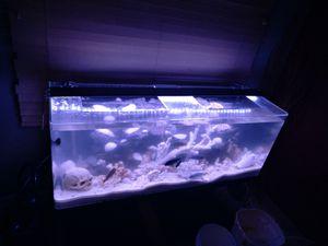 Seaclear acrylic tank for Sale in Phoenix, AZ
