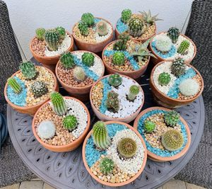 cacti in clay containers 🌵 cactus plants and aloe succulent for Sale in Houston, TX