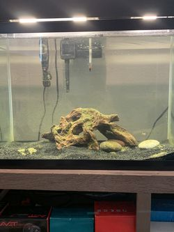 20 Gallon Fish Tank for Sale in Temecula,  CA