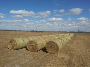 Round bales of hay for Sale in La Salle, TX