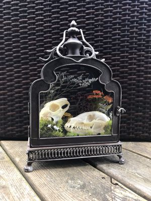 Rabbit and fox skull taxidermy art display for Sale for sale  Watertown, CT