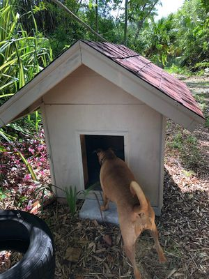 Red And White Dog House for Sale in Naples, FL