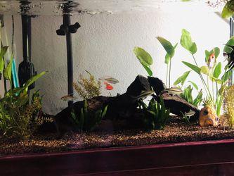 100 Gal Fish Tank for Sale in Carrollton,  TX