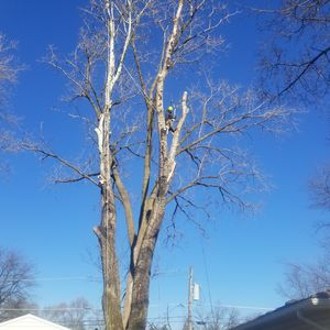 Tree cervise professional tel {contact info removed} for Sale in Carpentersville, IL
