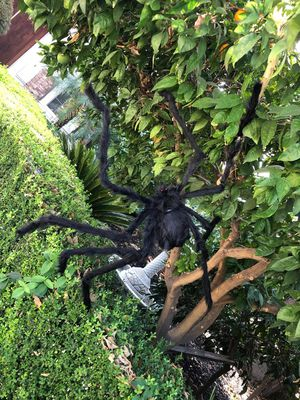 HALLOWEEN PARTY// 10 COUNTS @Halloween Spider/Giant Spider Decorations Indoor Outdoor Yard Decor for Sale in San Gabriel, CA