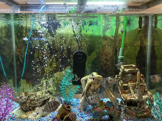 60 Gallon Fish Tank for Sale in Manalapan Township,  NJ