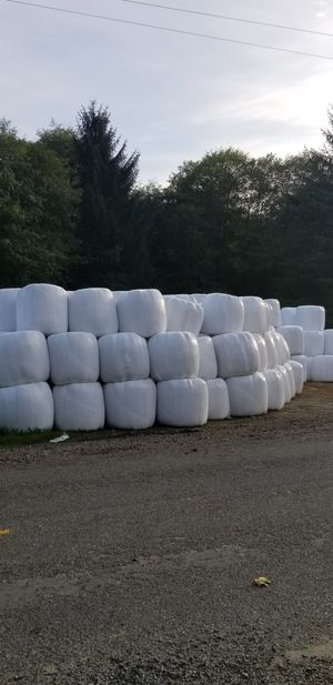 Hay - haylage and dry rounds for Sale in Elma, WA