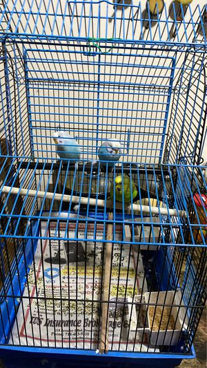 3 Parakeets for sale with some food and Cage for Sale in Queens, NY