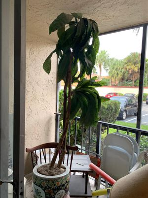 Faux Plant for Sale in Hollywood, FL
