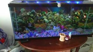 Fish tank for sale very expensive for low for Sale in Miami, FL
