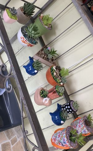 Real homemade succulent arrangements for Sale in Miami, FL